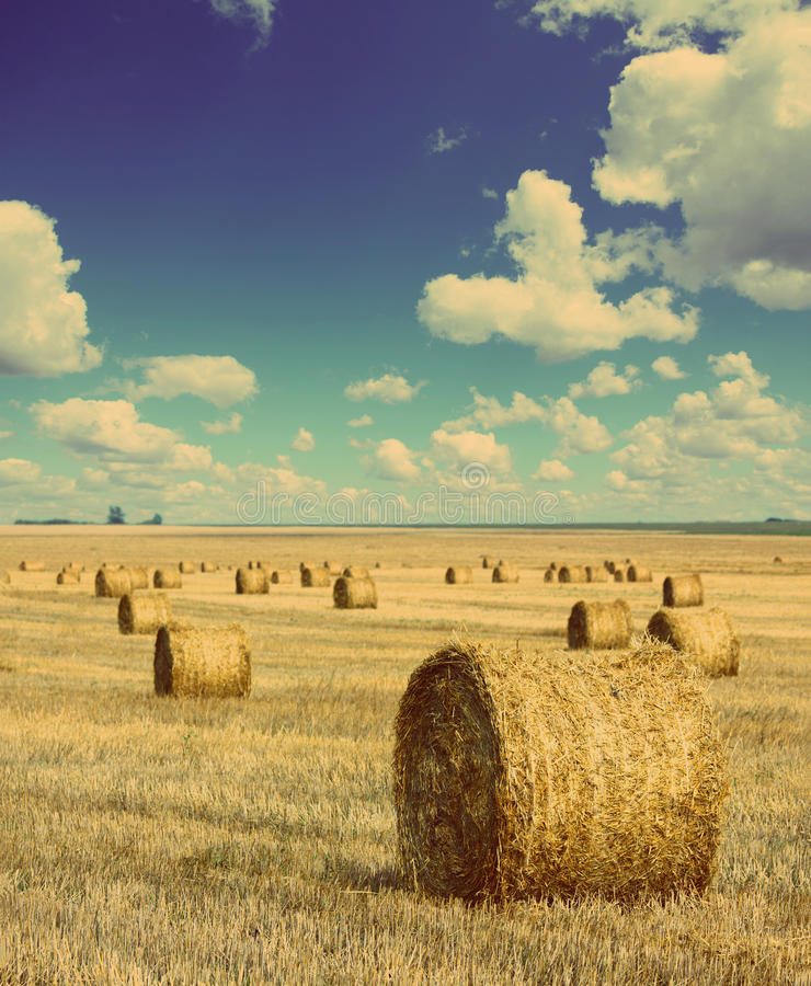Free Bales Of Straw In Field - Vintage Retro Style Stock Image - 37856251