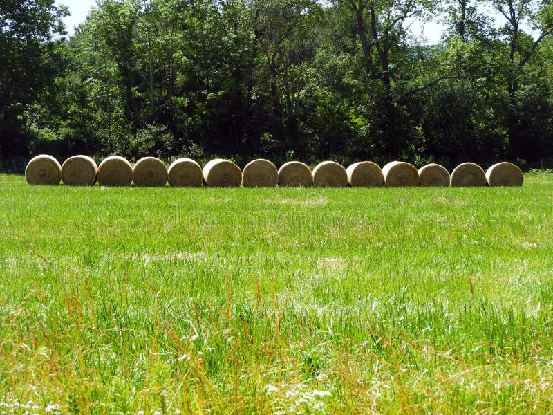 Bales of round hay bales lined up in a row stock image
