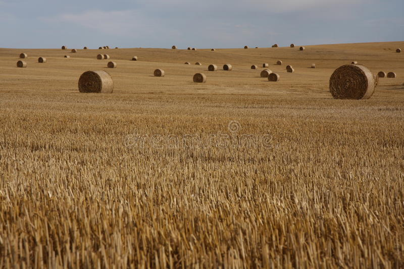 Download Bales of straw stock photo. Image of backdrop, light - 11346988