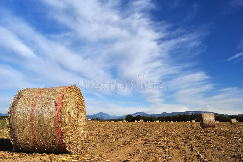 Download Bales of straw stock photo. Image of tree, landscape - 23584970