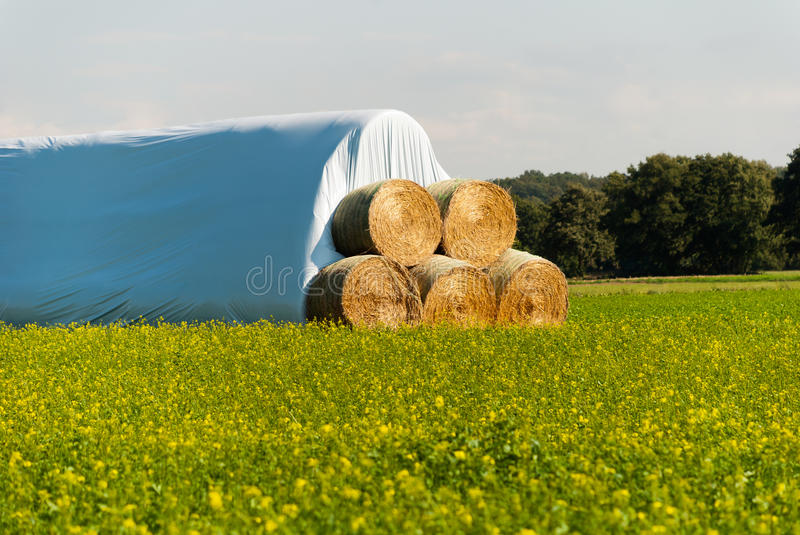 Download Bales of straw stock photo. Image of golden, farmland - 26622036