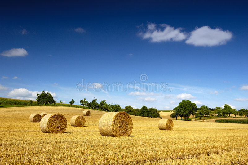 Bales of straw. Field with bales of straw in Germany royalty free stock photography