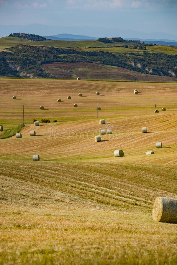 Bales of straw on a harvested field, Tuscany, Italy, Europe stock photos
