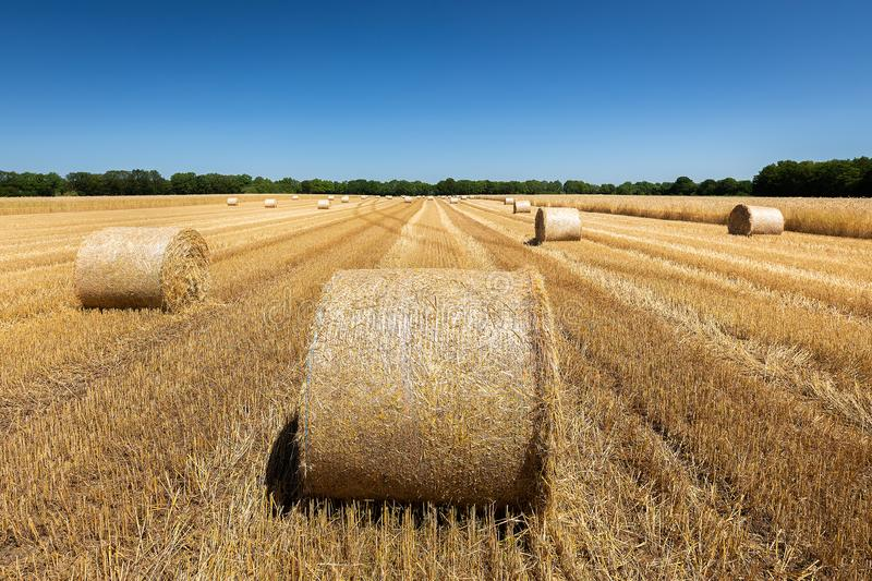 Bales of straw laying on a field stock images