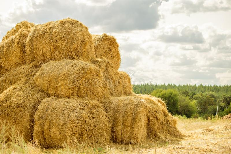 Bales of yellow golden straw stacked in a pile at the farm with blue sky on the background . Food for Farm animals. Idyllic rural scene stock photography