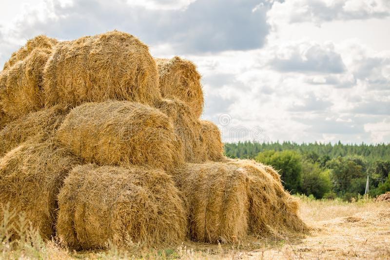Bales of yellow golden straw stacked in a pile at the farm with blue sky on the background . Food for Farm animals. Idyllic rural scene royalty free stock photography