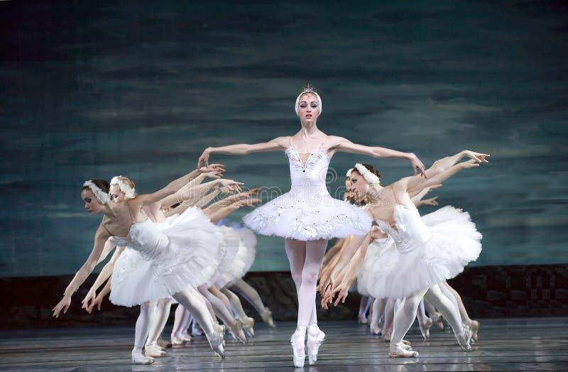 balettlaken utför den kungliga ryssswanen royaltyfria foton