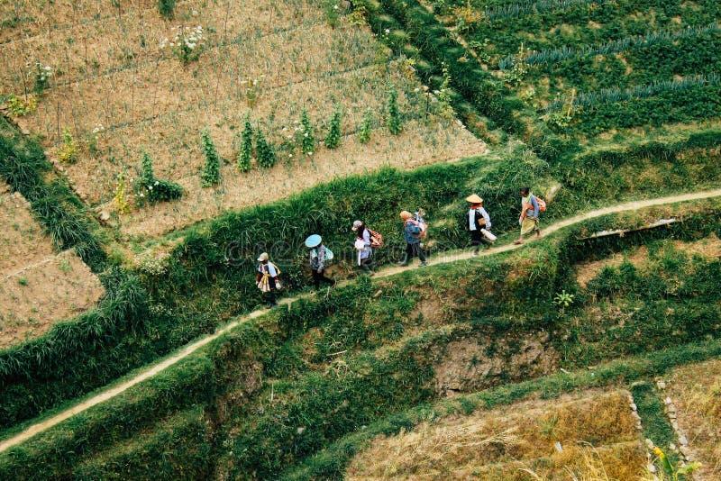 bali Индонесия сфотографировал террасу риса стоковое фото
