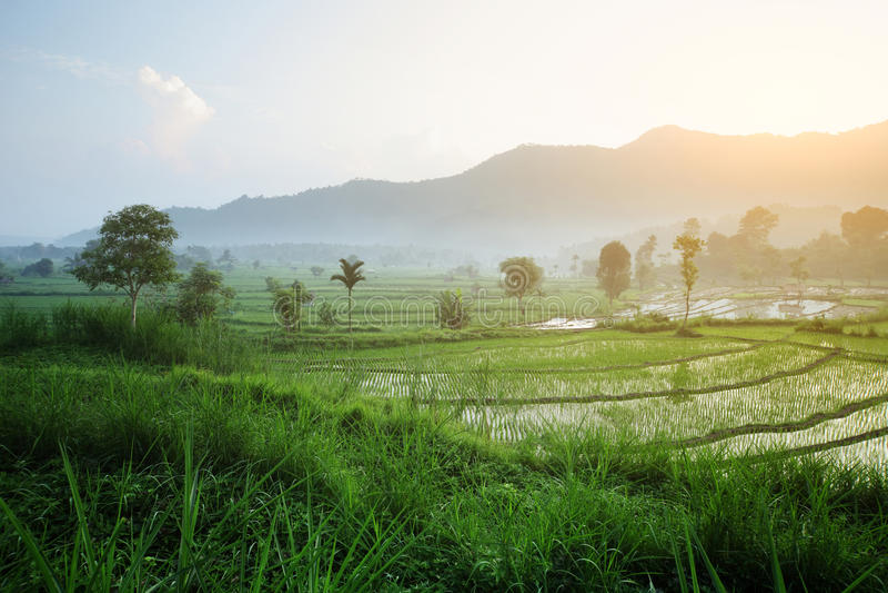 Bali photo stock