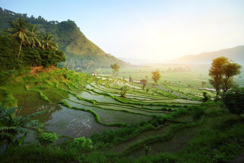 Download Bali stock image. Image of hillside, grow, organic, asia - 19054959