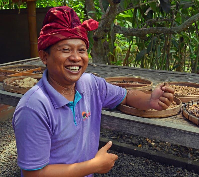 Bali Coffee Grower Displays Kopi Luwak. stock image