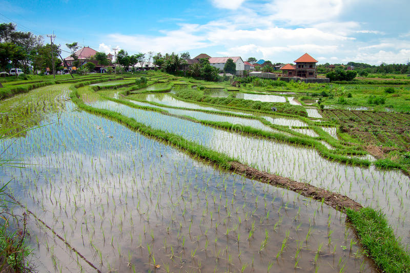 Download Bali Counryside With Rice Terraces Stock Photo - Image: 26962958