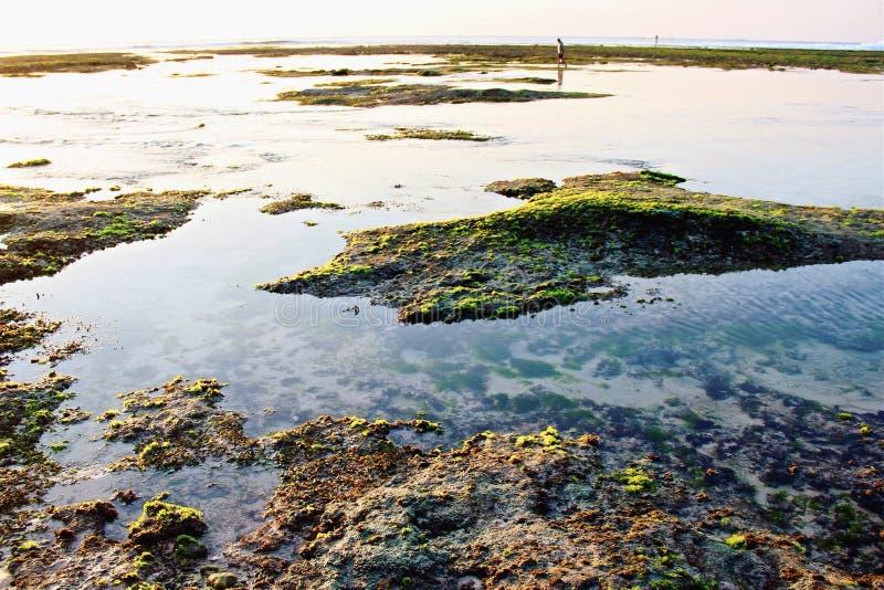 Bali esotico fotografie stock libere da diritti
