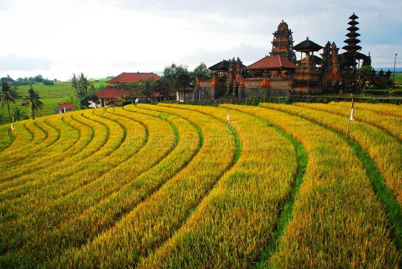 bali Indonésie Gisements verts de riz sur l'île de Bali photo stock