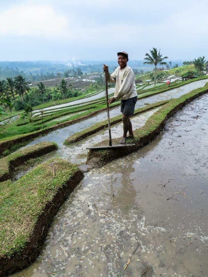 Bali, Indonesië - Juli 12, 2014: Een niet geïdentificeerde volwassen landbouwer wo royalty-vrije stock fotografie