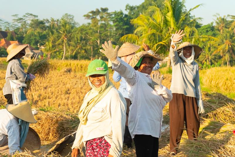 BALI, INDONESIA - April 12, 2018: Female Balinese farm-workers laugh as they traditional harvest a crop of rice from a royalty free stock photos