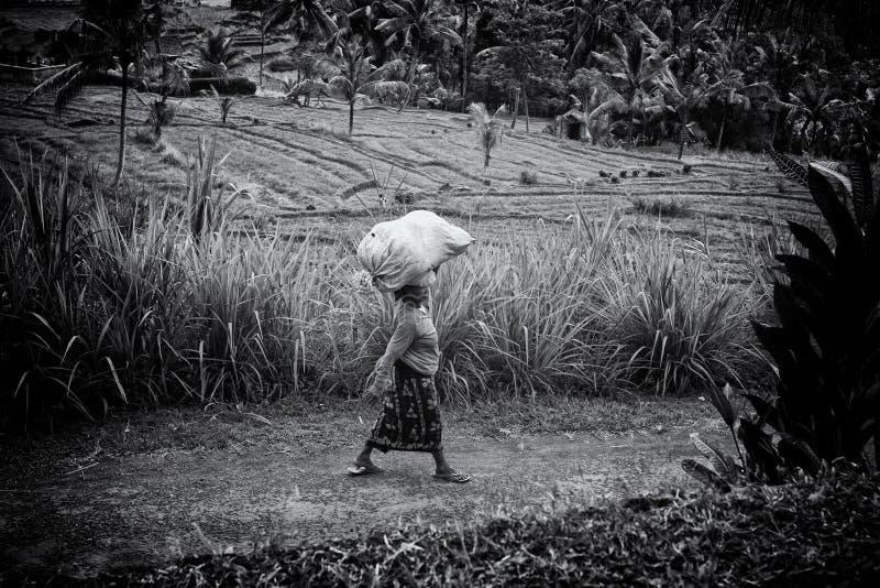 BALI, INDONESIA Asian women stock image