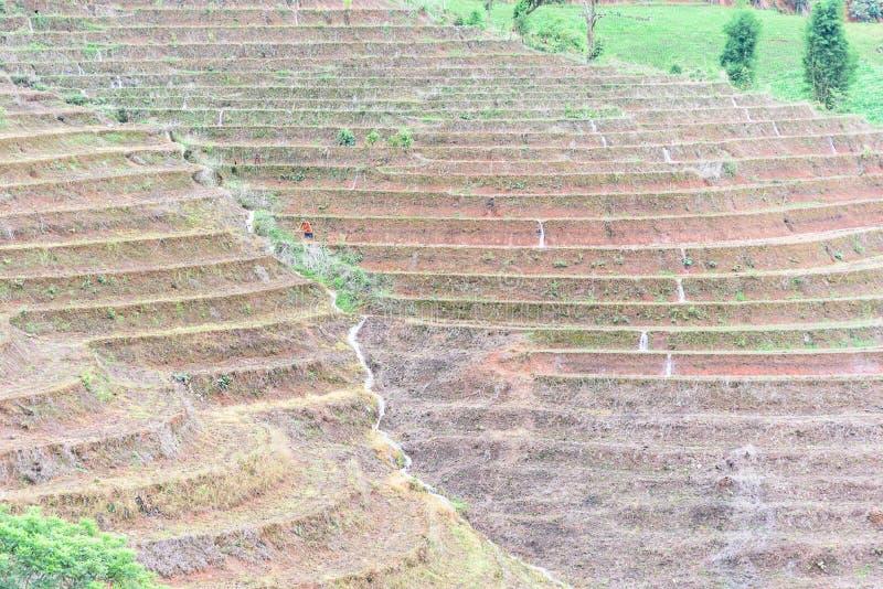 Download Bali Indonesia Fotografujący Ryż Taras Obraz Stock - Obraz złożonej z asia, azjata: 57666559