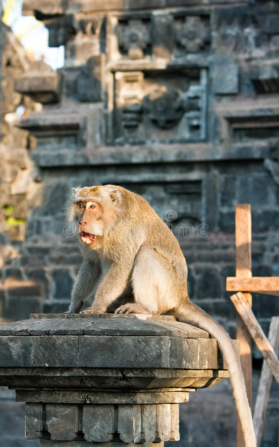 Bali,Indonesia. Monkeys in temple. stock photography