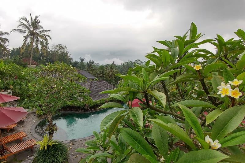 Bali Indonesien - Maj 06, 2019: Puri sebalisemesterort Stor oändlighetspöl med sikt på risterrasser och djungler av Ubud fotografering för bildbyråer
