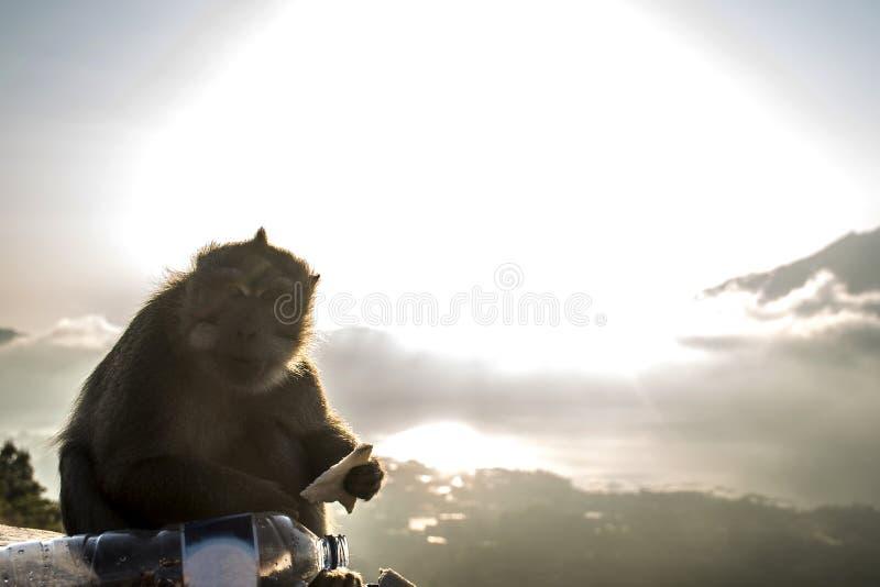 Bali Lake Batur monkey view sunset Gunung Agung. Bali Lake Batur volcano monkey view sunset over Gunung Agung stock photos