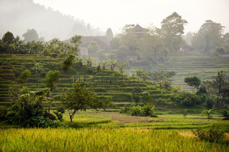 Download Bali-Reis-Felder stockfoto. Bild von asien, bauernhof - 47100094
