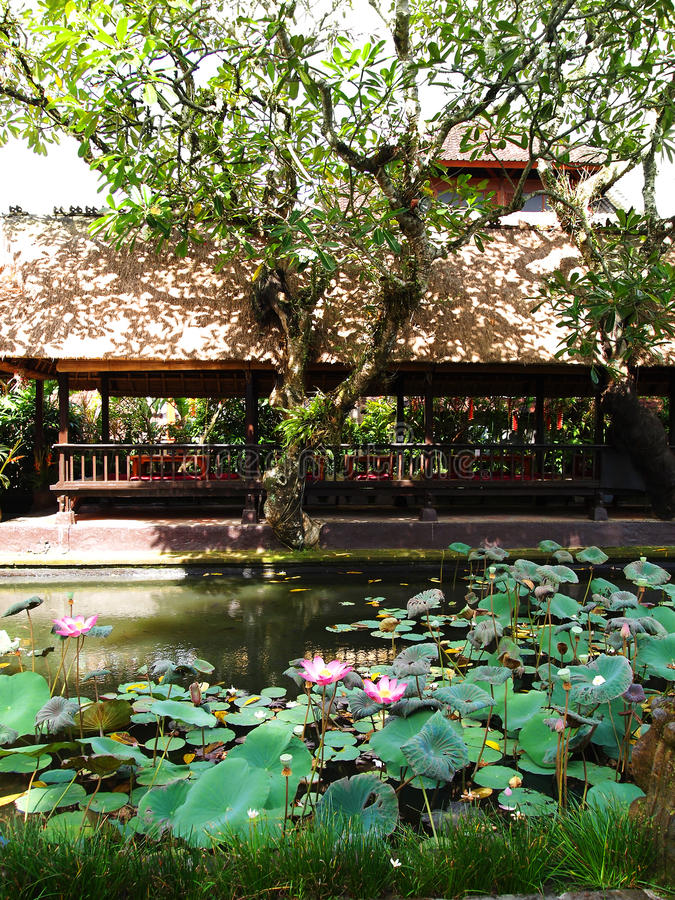 Bali restaurant in pavilion, lotus pond royalty free stock image