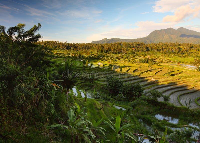 Bali. Rice fields of Bali island, Indonesia stock photos