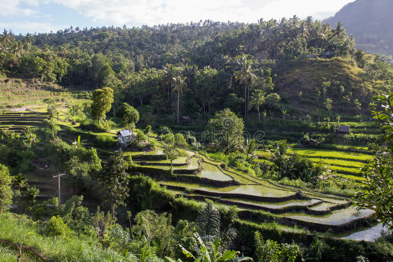 Bali rice terraces royalty free stock photography