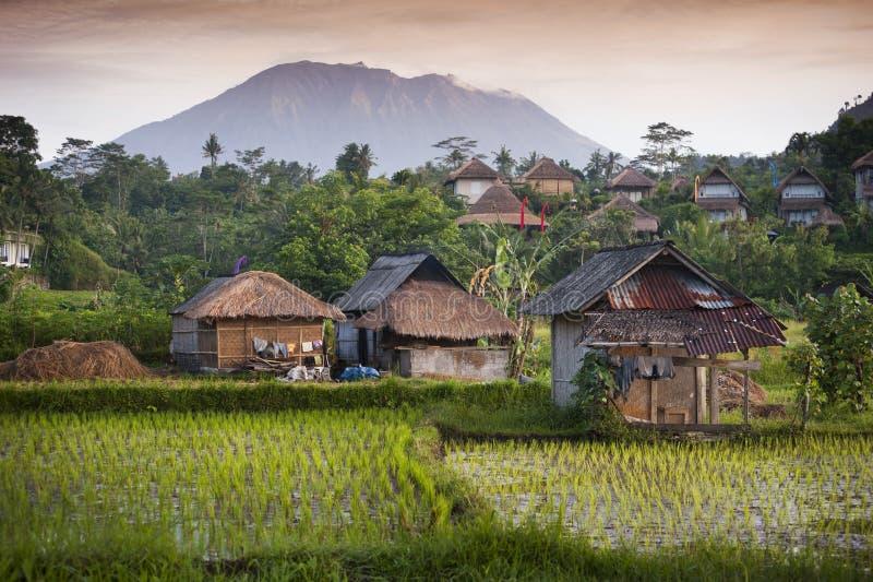Bali risfält. royaltyfri bild