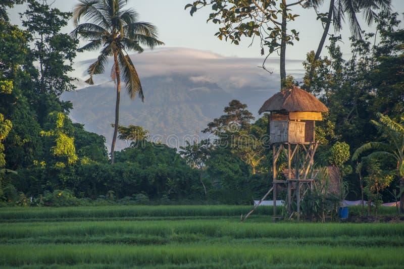Bali risfält och vulkan fotografering för bildbyråer