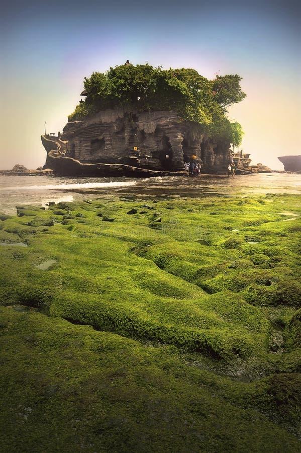 Bali Tanah Lot. Big coral in TanahLot, Bali royalty free stock photos