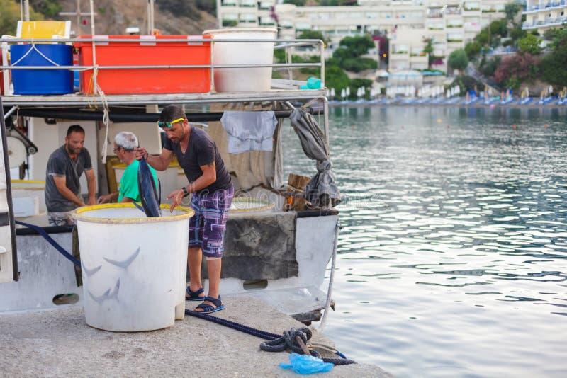 Bali, wyspa Crete, Grecja, - Czerwiec 30, 2016: Lokalni rybacy są rozładunkowym rybim chwytem od łodzi rybackiej zdjęcia royalty free