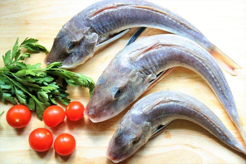 Balii gurnard pietruszka i pomidory obrazy stock