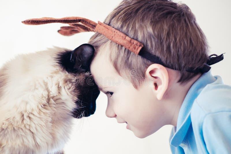 Balinese da criança do gato junto para jogar Amizade bonito foto de stock