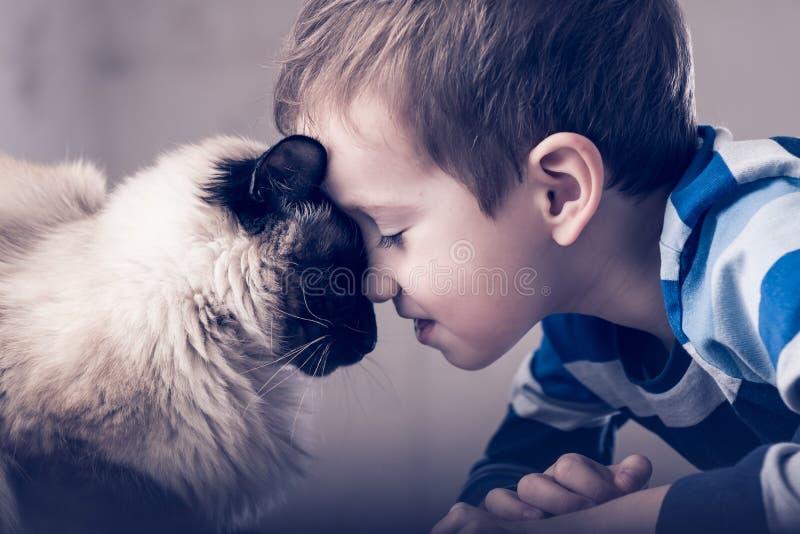 Balinese da crian?a do gato junto para jogar aprecie o amigo imagem de stock