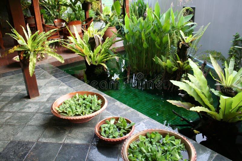 Balinese decor plants royalty free stock photography