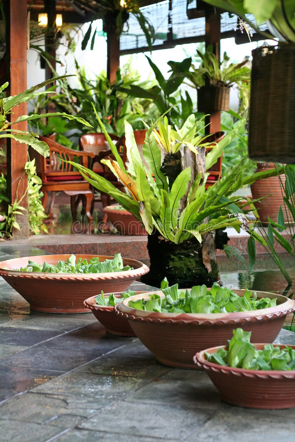 Balinese decor plants stock photography