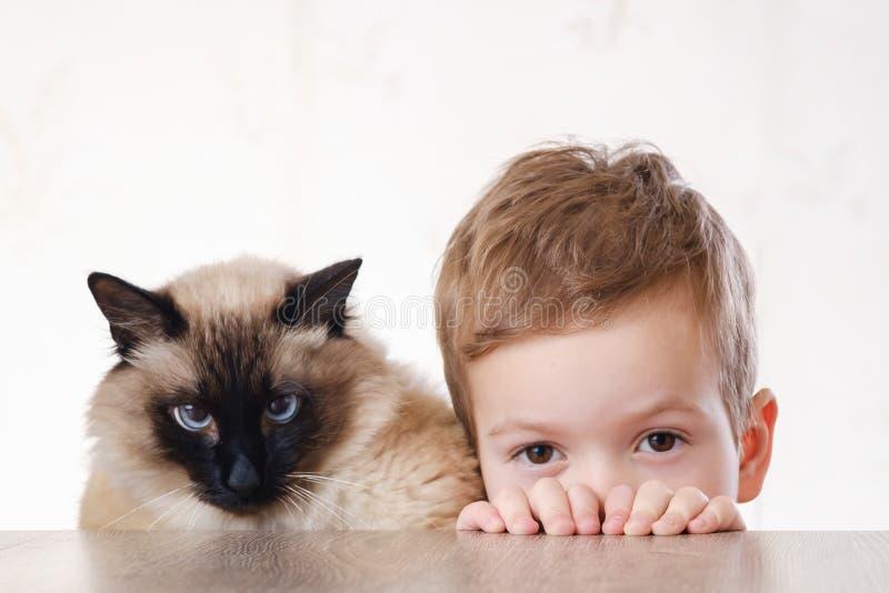 Balinese del bambino del gatto insieme giocare giovane fotografia stock libera da diritti