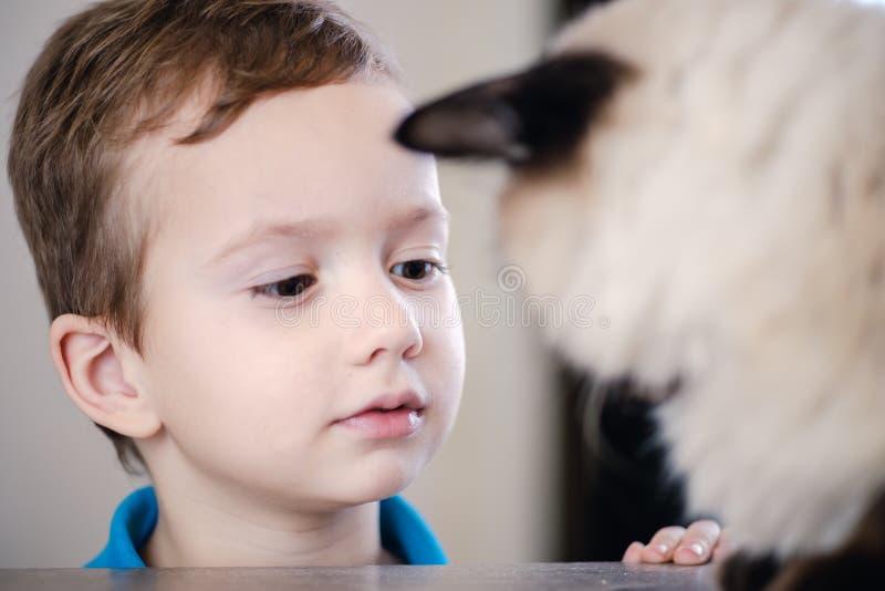 Balinese del ni?o del gato junto jugar lindo foto de archivo libre de regalías