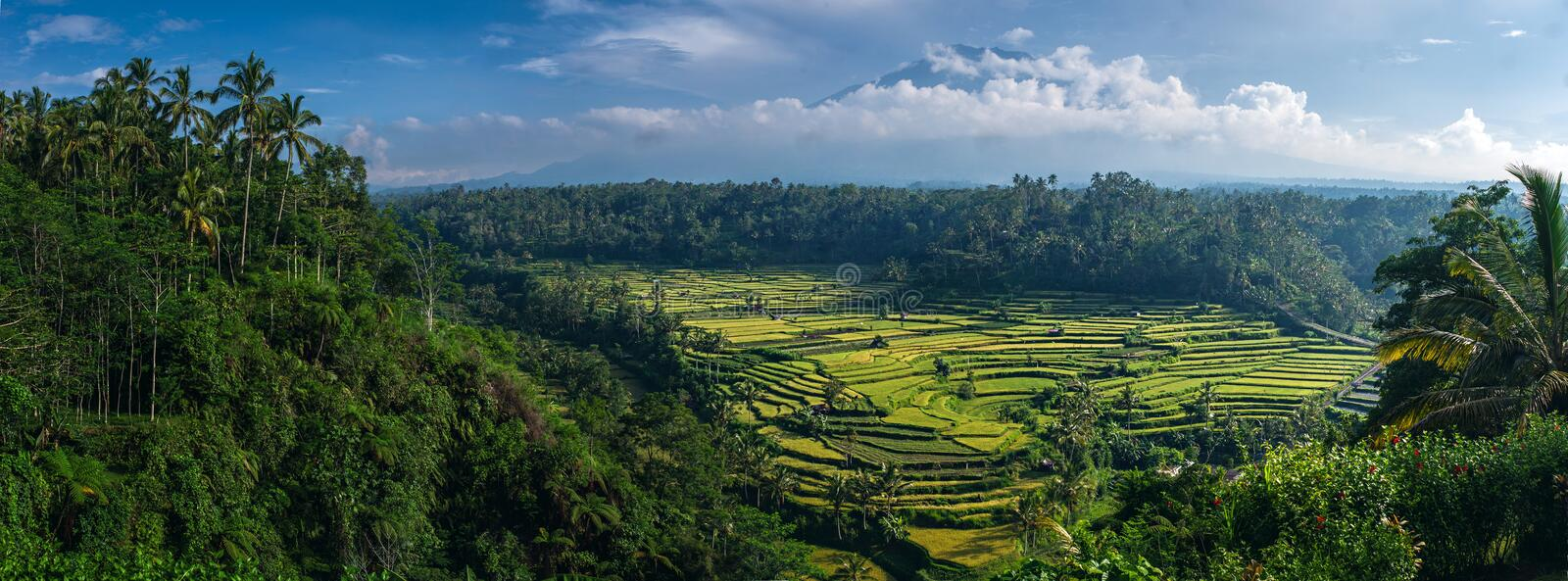 Balinese landscape with rice terraces stock photo