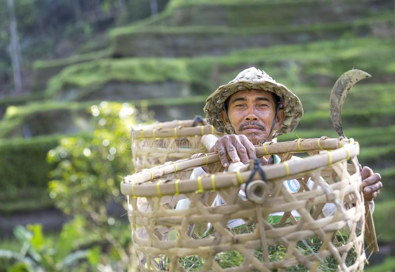 Balinese rice field worker on rice field royalty free stock photo