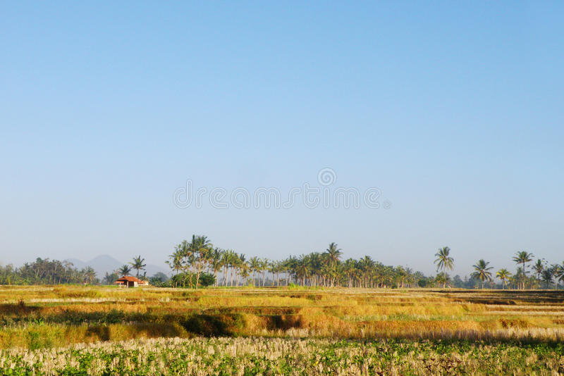 Balinese Rural Plantation Landscape Royalty Free Stock Photo