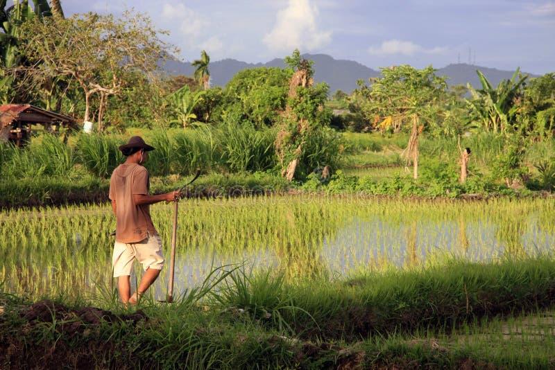 Download Balinesebonde med skäran redaktionell bild. Bild av natur - 78732351