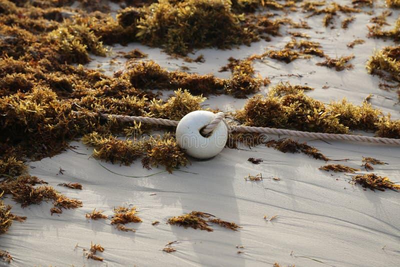 Balise sur le rivage de l'océan photo libre de droits