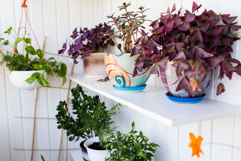 Balkong med blommor arkivfoton