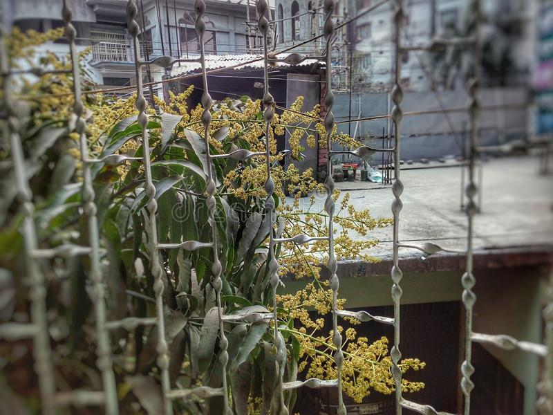 Balkongen fotografering för bildbyråer