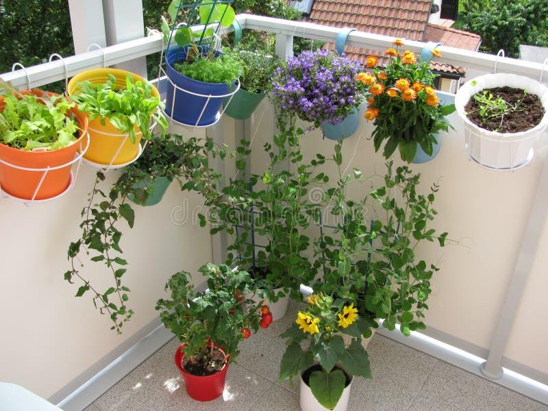 balkongen blommar grönsaker fotografering för bildbyråer
