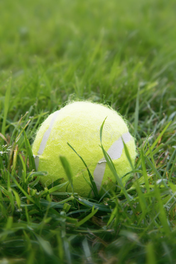 Download Ball stock image. Image of outdoor, fallen, sport, green - 896291