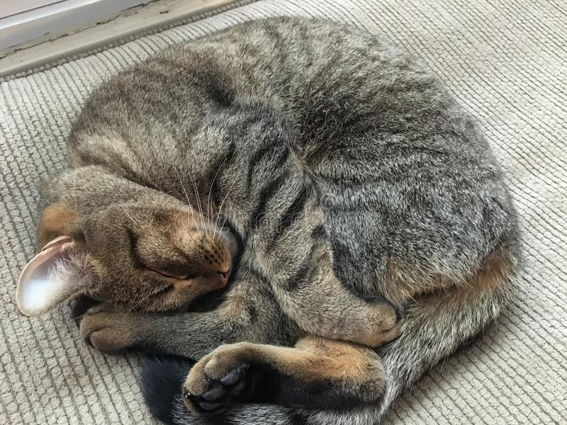 Ball of cat royalty free stock photo